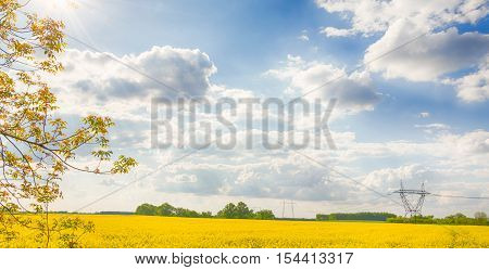 Rapeseed field in Hungary. Brassica napus. Hungarian countryside. Shining sun. Cloudy blue sky. High voltage towers. Sunny day. Warm dry calm weather. Sunlight.