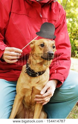 Old, smiling woman holding paper hat on stick close to dog's muzzle. Dog in funny, fake hat with owner in park.