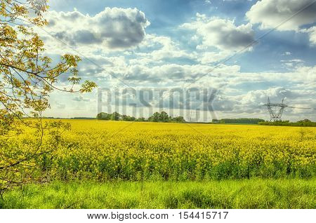 Rapeseed field in Hungary. Brassica napus. Hungarian countryside. Shining sun. Clear blue sky. High voltage towers.