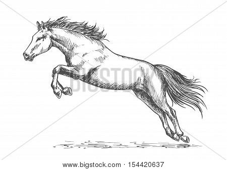 Horse racing. Wild mustang running, rearing and jumping high with front hooves lifted up. Vector equine emblem for sport horse racing