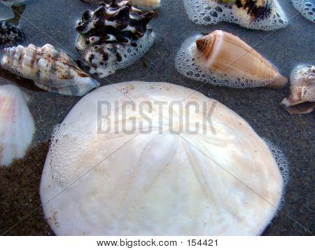 Seashells Upclose