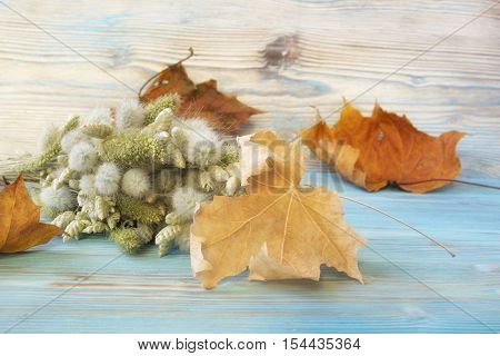 Old autumn maple leaf bouquet of Lagurus ovatus and Briza Poaceae on the blue wooden table. Vintage style background. Herbarium. Artistic backdrop selective soft focus