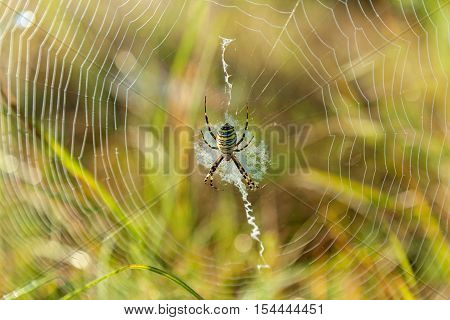 Spider on a spider web.Spider caught in a cobweb close-up on the green background.