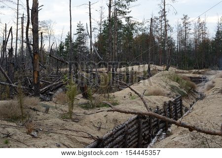 The war in Ukraine. Lugansk region on October 7 2016. Trees damaged by shelling from the weapon. The fortifications and trenches of the Ukrainian army