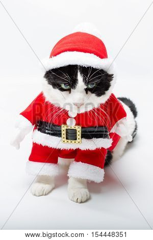 standing cat in Santa Claus hat on studio white background. Christmas holiday concept in vertical. poster