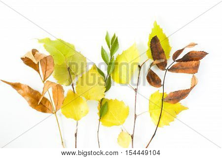 Autumn leaves of different trees on a plane. Isolated object.