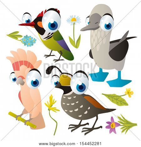 vector cute colorful cartoon isolated birds and flowers illustrations collection: booby, hummingbird, cockatoo, quail