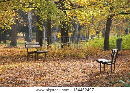several wooden benches in the park in autumn and pavement completely covered with fallen leaves