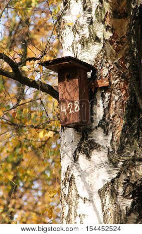 wooden nesting box for birds on the trunk of a birch in autumn