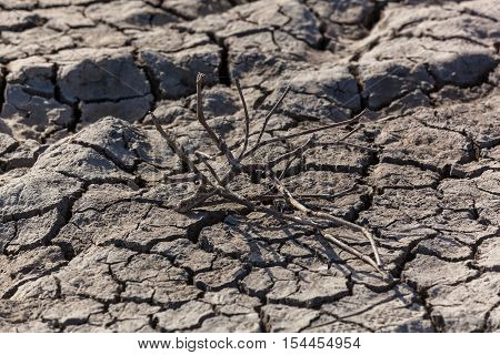 Drought.Dried branch of the plant lies under the sun on the dry soil.
