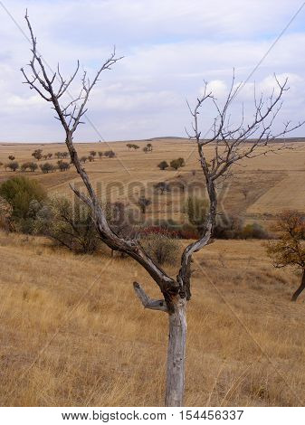 What is not interesting about a dried tree that resembles a horned animal?
