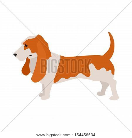 Basset hound dog and pet companion, purebred hound breed, vector illustration