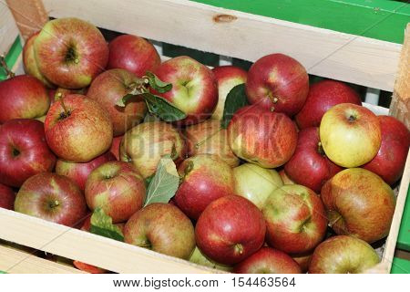 Fresh organic apples in a wooden crate