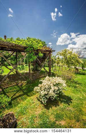 Old wooden pergola covered with flowers in summer, Italy