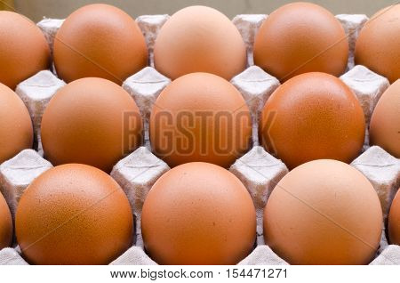 Group of fresh Chicken egg eggs in paper tray.