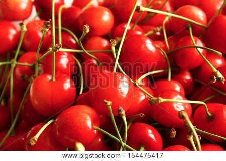 The ripe cherries collected from the tree