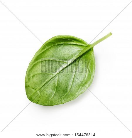 Fresh basil leaf isolated on white background. Single object with clipping path. Top view