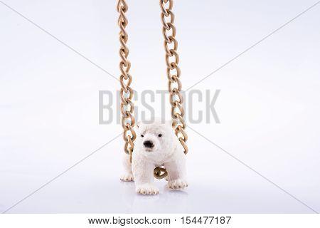 Polar Bear Cub And Chain