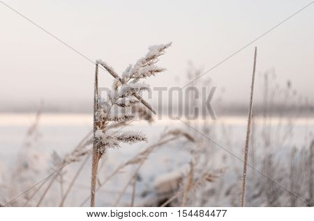 Close up view of frozen grass in winter field