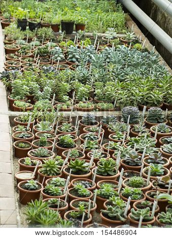 Interior of greenhouse for growing flowers, plants and cactus. Market for sale plants. Many plants and cactus in pots