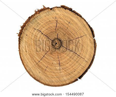 Tree trunk cross section with tree rings that show age