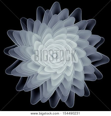 X-ray succulent isolated. Radiography illustration 3d render