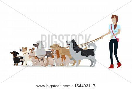 Dog walking banner. Woman walks with Golden Retriever, Jack Russell Terrier, Maremma Sheepdog, Cavalier King Charles Spaniel, Pekingese, Doberman Pinscher breeds. Dog pet shop banner poster. Vector.