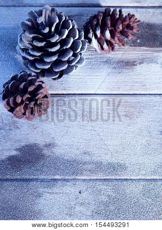 close up view  of  snowbound cones wooden back