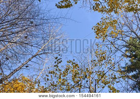 Autumn Tree Tops Against The Sky