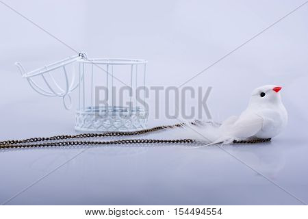White Dove In The Cage, Pigeon Locked In A Cage