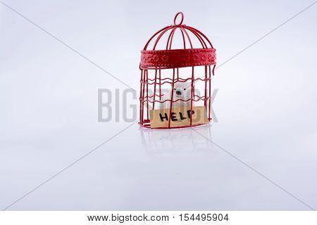 Polar Bear Captive In A Cage