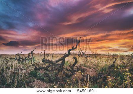 Amazing sunrise on old vineyard, toned like Instagram filter