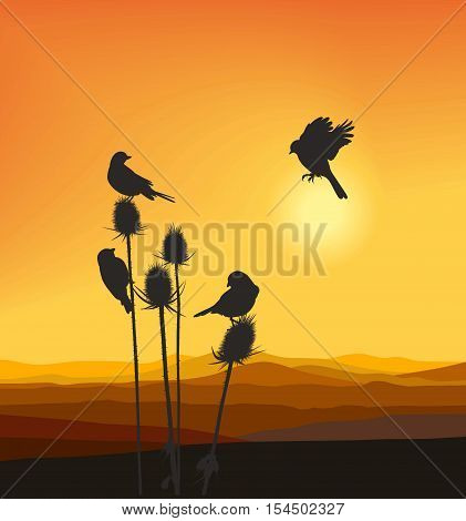vector illustration small birds on a thistle