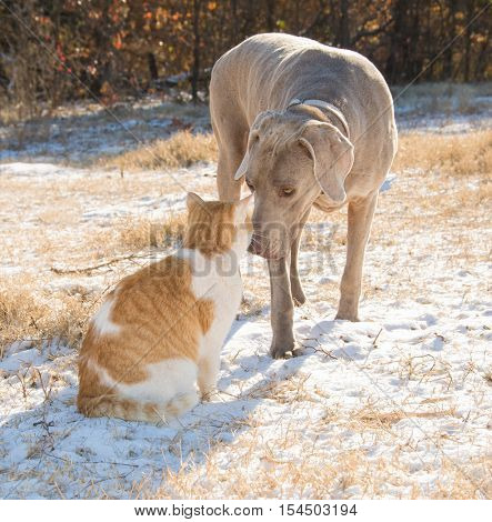 Dog and cat nose to nose in a snowy field