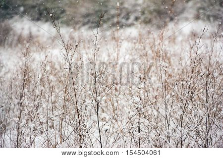 Dry grass in the snow. Winter landscape. The texture of dry grass in the snow.