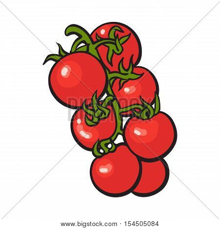Sketch style drawing of shiny ripe red cherry tomatoes, vector illustration isolated on white background. Appetizing bunch of bright red cherry tomatoes, side view, hand drawn illustration