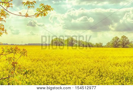Vintage spring season landscape. Rapeseed field in Hungary. Brassica napus. Hungarian countryside. Shining sun. Cloudy blue sky. Sunny day. Warm dry calm weather.
