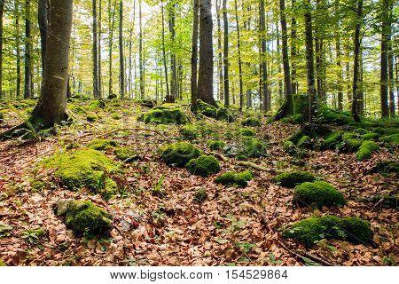 View of woodland in Kočevski Rog called also Kočevje Rog Slovenia