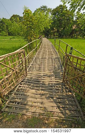 Bamboo Bridge over a Rice Paddy in Assam India