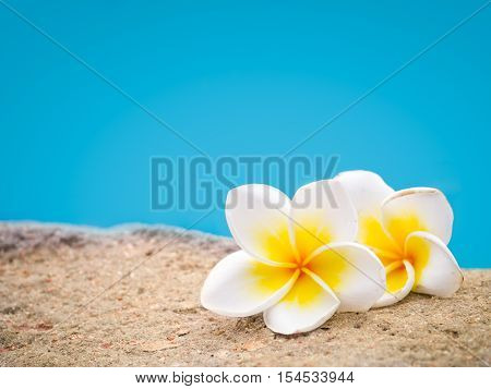 Two plumeria flowers on the sand in front of blue pastel background leaving copyspace on top