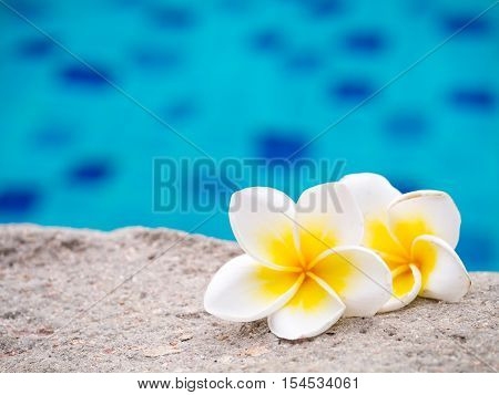 Two plumeria flowers on the sand beside swimming pool