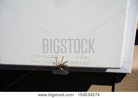 HARBOR SPRINGS, MICHIGAN / UNITED STATES - AUGUST 2, 2016: A paper wasp (Polistes dominula) alights on an exterior electric outlet enclosure.