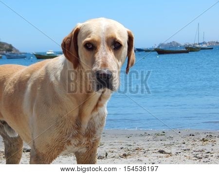dog on the beach with a look of guilt
