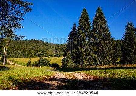 Grass and trees in the Kočevski Rog or Kočevje Rog Slovenia