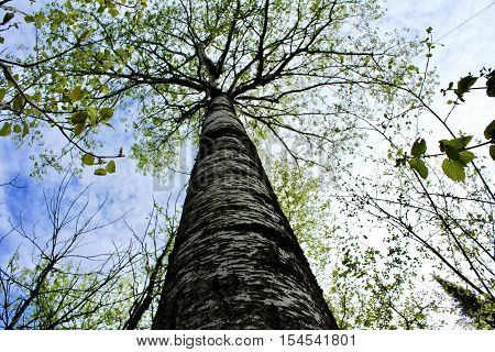 Worm's eye view of tree in the woods