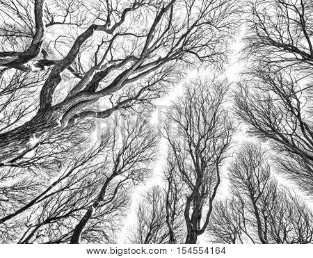 background from bare tree branches