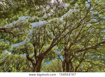 background from tree branches with green foliage