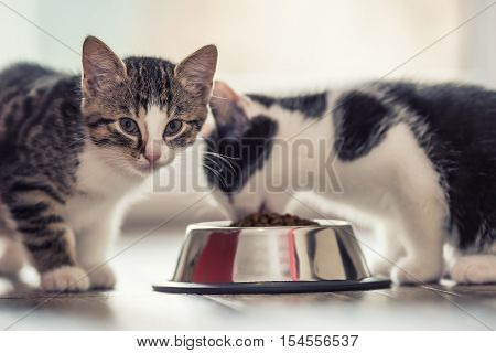 Cat. Cute little kitten with a bowl of granules at home or in the garden.