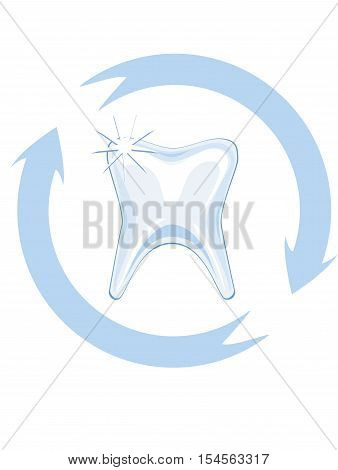 isolated clean tooth with safe round, vector