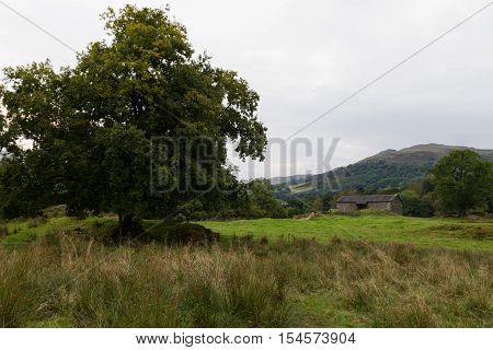Scenic view of Tree and House in Ambleside countryside Cumbria UK